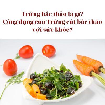 Bài Viết Trứng bắc thảo là gì? Công dụng của Trứng cút bắc thảo với sức khỏe?
